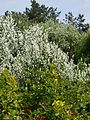 Grishko botanical garden-7.jpg
