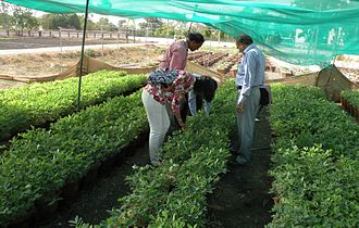 Directorate of Groundnut Research - Groundnut cultivation under shade net