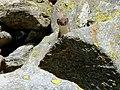 Guckst Du im Val Duana - panoramio.jpg