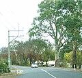 Gumeracha street.jpg