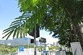 HK 粉嶺 Fanling 沙頭角公路 Sha Tau Kok Road Shek Chung Au Sept 2017 IX1 green pinnate compound leaves 03.jpg