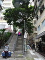 HK Sheung Wan 上環 磅巷 Pound Lane stairs tree Feb-2016 DSC 006.JPG