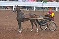 Hackney Pony (7714709846).jpg
