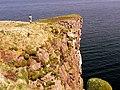 Handa cliffs - geograph.org.uk - 1134860.jpg