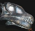 Haplocanthosaurus delfsi sauropod dinosaur (Morrison Formation, Upper Jurassic; Delfs Quarry, Garden Park, north of Canon City, central Colorado, USA) 2 (15384411826).jpg