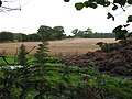 Harvested cereal field - geograph.org.uk - 952526.jpg