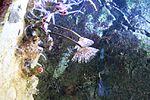 Haus des Meeres 8719.jpg