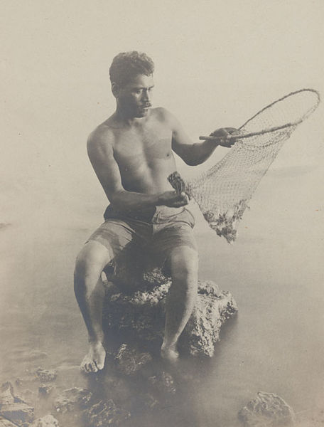 Fil:Hawaiian fisherman retrieving fish from small net, 1925.jpg
