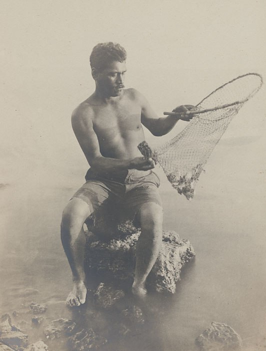 Hawaiian fisherman retrieving fish from small net, 1925