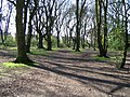 Hearsall Common woodland - geograph.org.uk - 159855.jpg