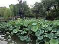 Hefengsimianting and lotus of Zhuozhengyuan Garden 2.JPG