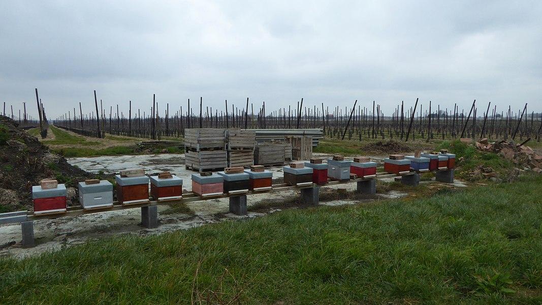Ruches des vergers de la Cliqueterie Herlies Nord Nord-Pas-de-Calais-Picardie France.