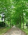 Herne Allee Südfriedhof.jpg