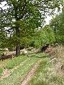 Hinton Park, track - geograph.org.uk - 1295628.jpg