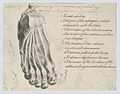Historical Subject with Men and a Boy Near a Ship (recto); Anatomical Study of a Foot (verso) MET DP866798.jpg