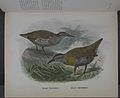 History of the birds of NZ 1st ed p176-2.jpg
