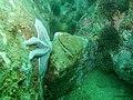 Hororangi Marine Reserve (4415679623).jpg