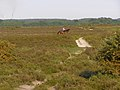 Horse and rider on Yew Tree Heath, New Forest - geograph.org.uk - 184346.jpg