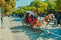 Horse coach in a busy Tehran street.jpg