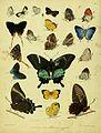 HorsfieldMoorCatalogueEastIndiaCompanyLepidoptera2PlateI.jpg