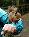 How to Correctly Display Your Squirrel (15270158008).jpg