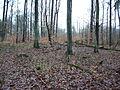 Huegelgrab Eppingen 1.jpg