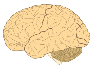 Orgán mozog je tvorený nervovým tkanivom