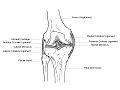 Human Knee Anatomy.jpg