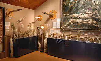 Icelandic Phallological Museum - The former exhibition room in Húsavík, 2008