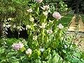 Hydrangea orto botanico milano 01.JPG