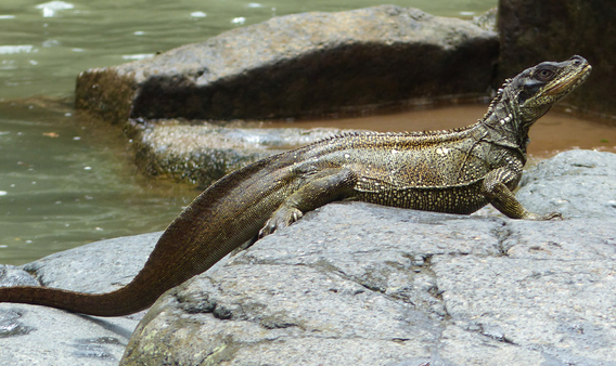 Taman Wisata Alam Gua Pattunuang Wikiwand