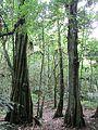 Iʻi trunks (7189149413).jpg