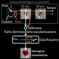 Immagine parametrica dei tratti distintivi della vascolarizzazione.jpg