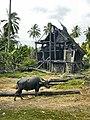Indonesia-Bull.jpg