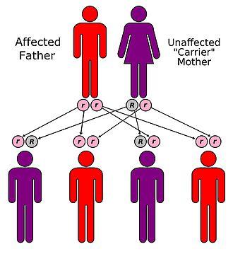 Mendelian traits in humans - Image: Inheritance 01