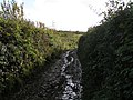 Is it a track, is it a stream^ - geograph.org.uk - 1583012.jpg