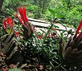 J20150625-0081—Monardella macrantha—RPBG (19337618395).jpg