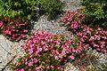 Japanese garden @ Fort d'Issy-les-Moulineaux (34984288461).jpg
