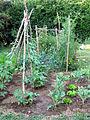 Jardin potager 3.jpg