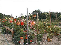 jeux jardin