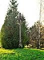 Jokniai, kryžius 3.jpg