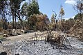 Jordan River park after fire in summer 2011 (2).JPG