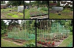 Vrt wikipedia for Horticultura definicion