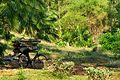 Jungle at Mount Mulanje (15073630254).jpg