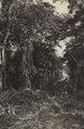 KITLV - 88315 - Kleingrothe, C.J. - Medan - Forest near the plantation Loeboe Dalam of the Deli Company in Deli - 1905.tif