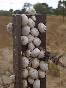 List of invasive species in Australia - Wikipedia, the free ...