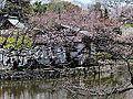 Kamakura, le sanctuaire (2).jpg
