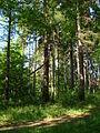 Kamienna Góra, Dolnośląskie Centrum Rehabilitacji, park (Aw58) DSC05311.JPG