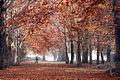 Kashmir autumn.jpg