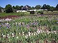 Kauno botanikos sodas, 2005-06-09.JPG